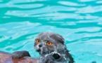 Stupidalgo veut les JO mais n'est pas capable de chauffer correctement les piscines municpales !