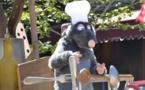 Le rat, la maire et le babouin