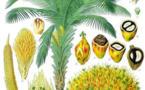 Les écolos parisiens en palme sèche !