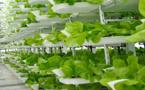 Paris-Habitat : une saladerie commerciale sur le toit d'une teinturerie industrielle !