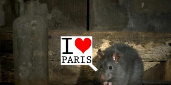 """Résultat de recherche d'images pour """"rats tas ordures trottoirs"""""""